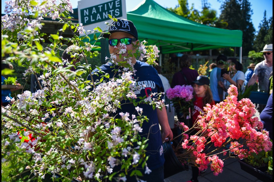 """Thom Cannell walked his new leafy purchase with daughter Summer Cannell in tow. The Cannells were just some of the many who attended the UBC Botanical Garden's annual plant show """"A Growing Affair"""" Saturday. Photograph by: Rebecca Blissett"""