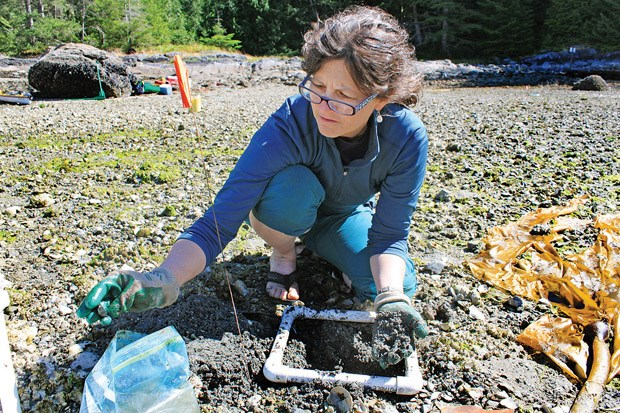 SFU archeologist Dana Lepofsky examines material found in an ancient clam garden on a Quadra Island beach.