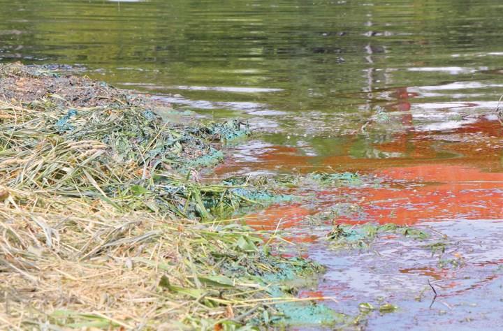 bgalgae