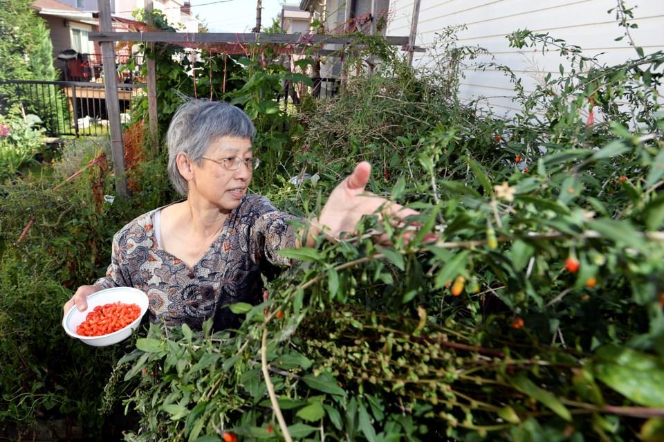 """Michaelina """"Mee Mee"""" Teo picks goji berries in her East Vancouver backyard garden. See more photos"""