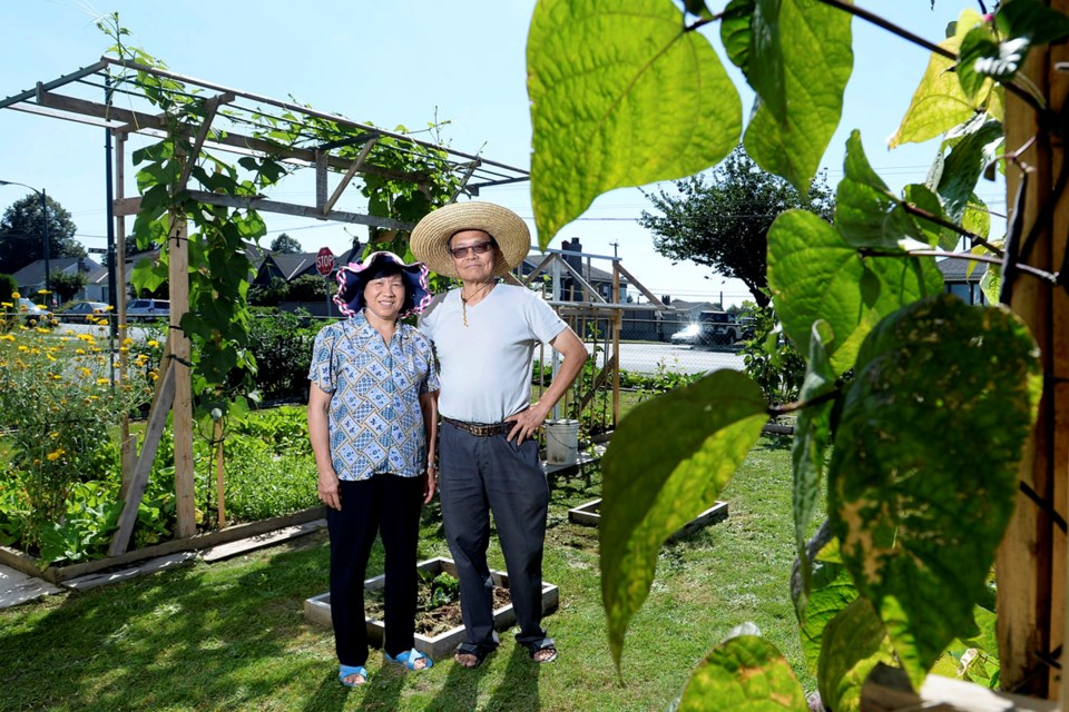 Like many immigrant Asian seniors, Jason Lee and his wife, Jean, grow a colourful mix of eastern and western crops in their East Van garden. Photo Jennifer Gauthier