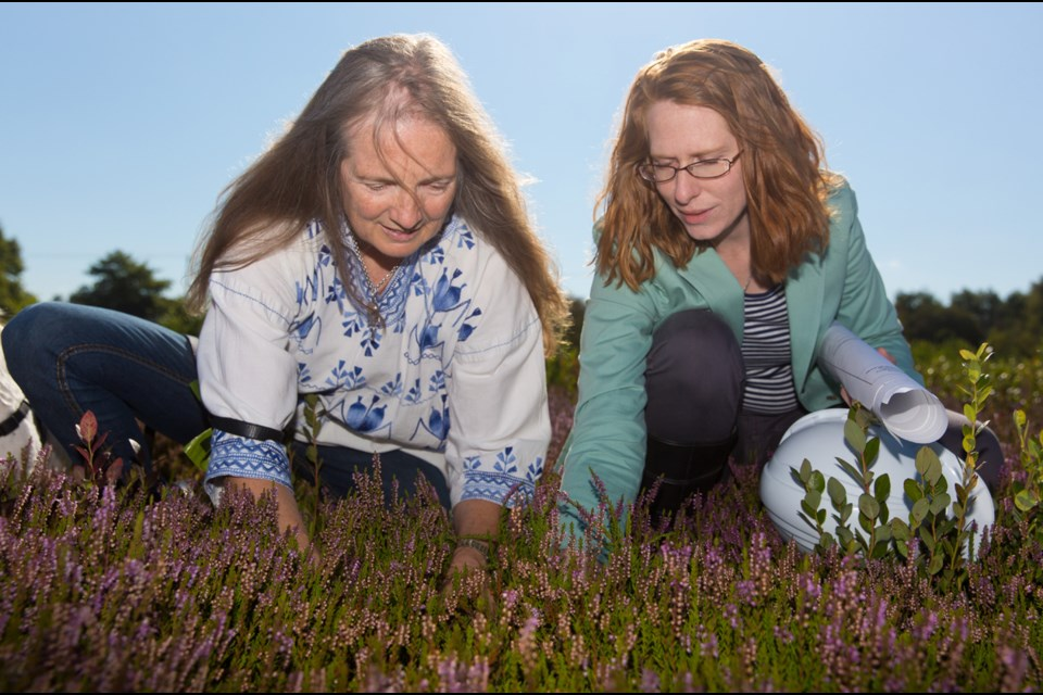 Environmentalist Sharon MacGougan, left, and engineer Laurel Morgan assess some sphagnum moss on the Garden City Lands