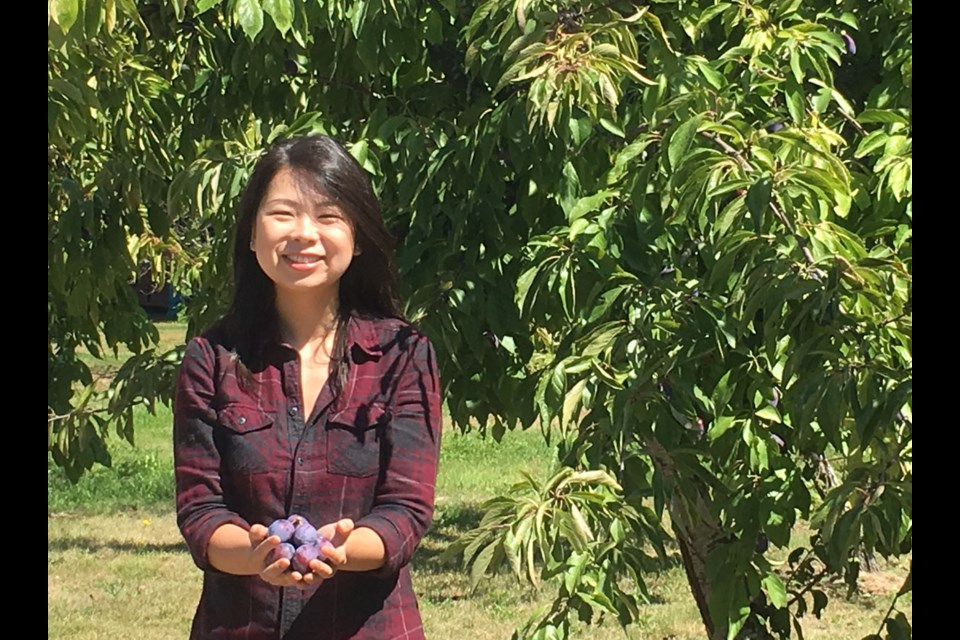 Kelly Ding picks plums for Richmond Eats Challenge.