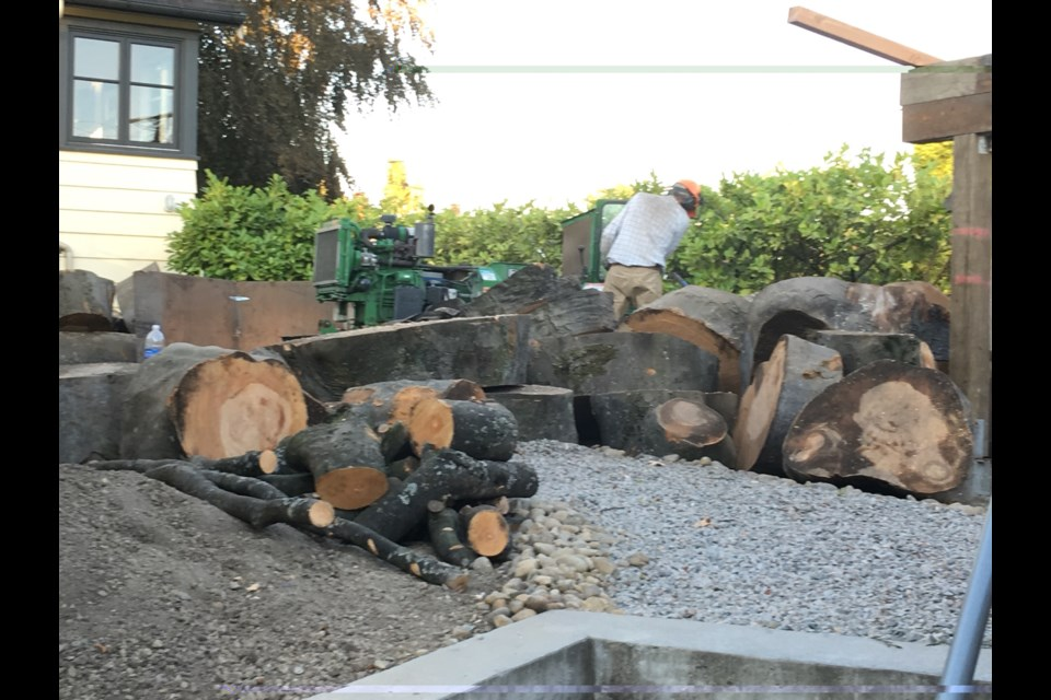 Neighbours contributed this photo of the remains of a beech tree that was recently cut down on Ash Street.
