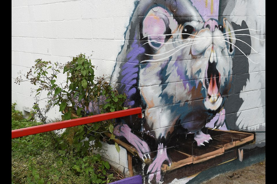 Figuring out the extent of the city's rat problem isn't easy, but a comprehensive rat surveillance program could change that. This rat mural can be found outside of Storm Brewery. Photo Dan Toulgoet