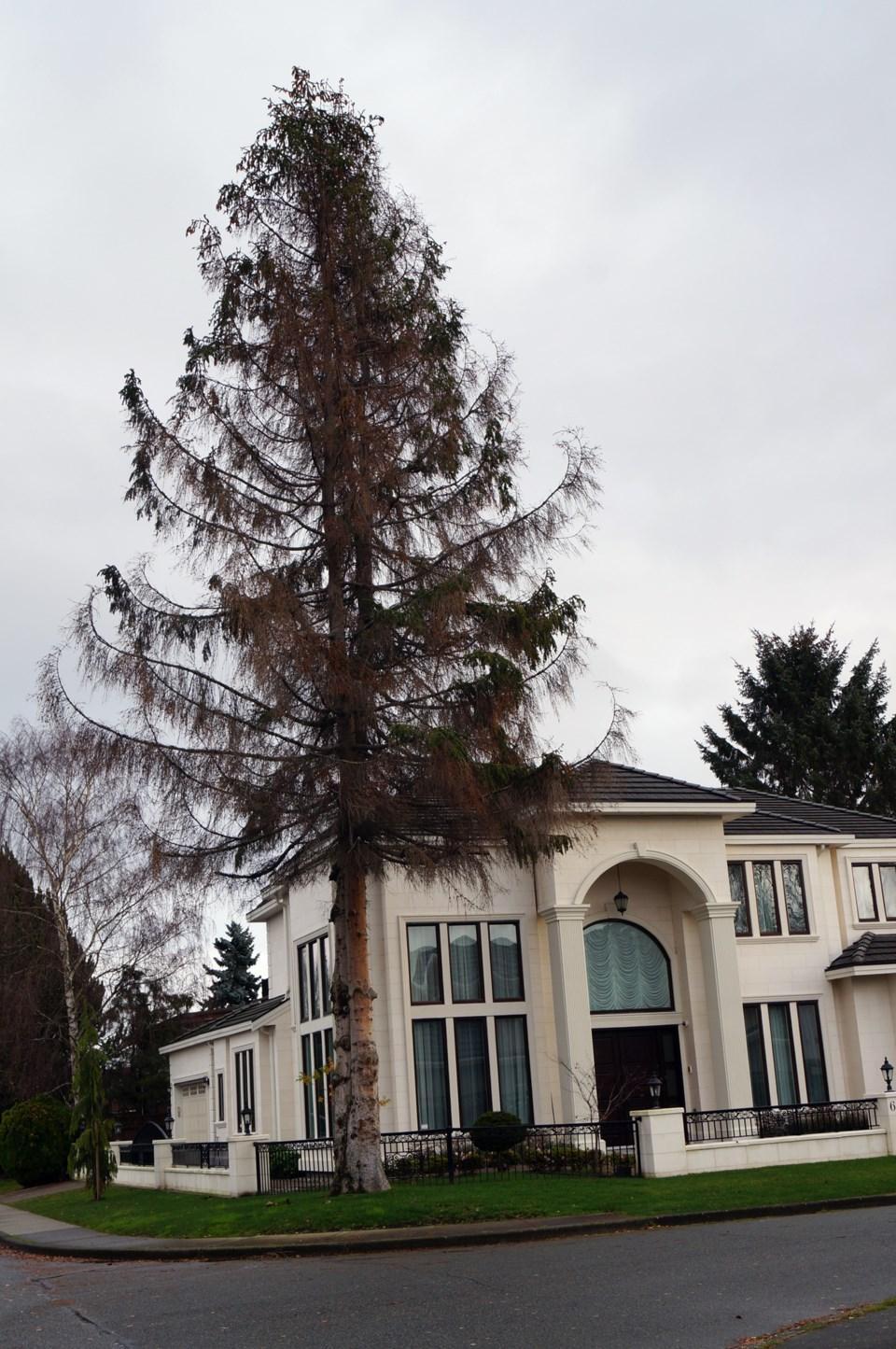 tree dies