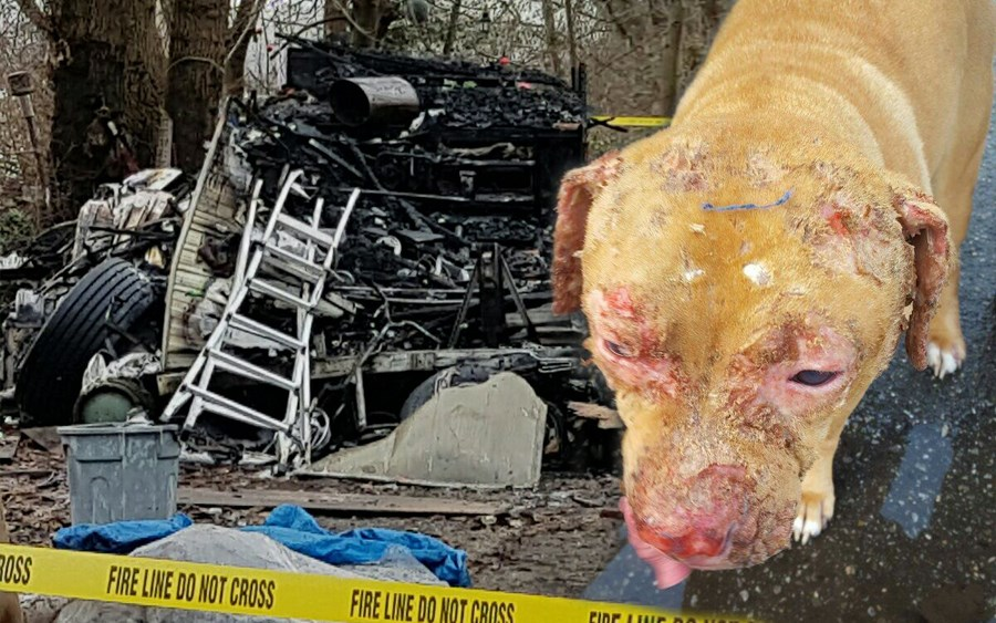 Isabelle the pit-bull suffered second-degree burns during her owner's trailer fire before Christmas