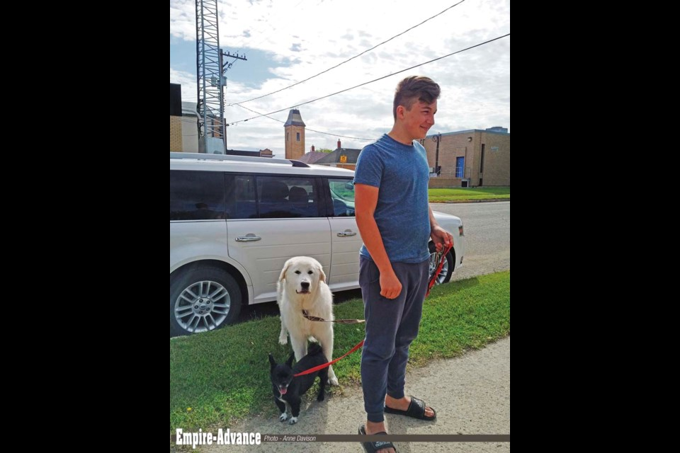 Wyatt Gillis with small and large, black and white - Bandit an energetic Pekinese/Pomeranian, and a great white Pyrenees named Luna, out for a walk, but stopping to visit with admirers outside Virden Empire-Advance office, Jun. 29.