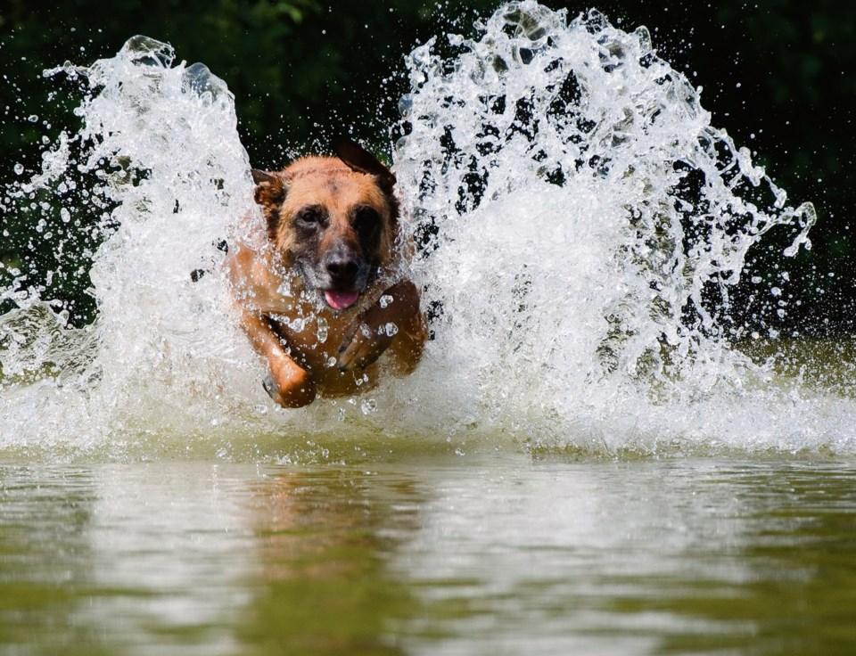 dog algae