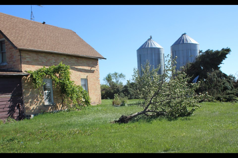 The brick home remains but it was clobbered by flying grain bins and is not liveable. Mature apple and plum trees are ruined along with every large spruce tree.