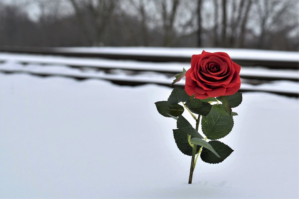 red-rose-in-snow-3267057_1280