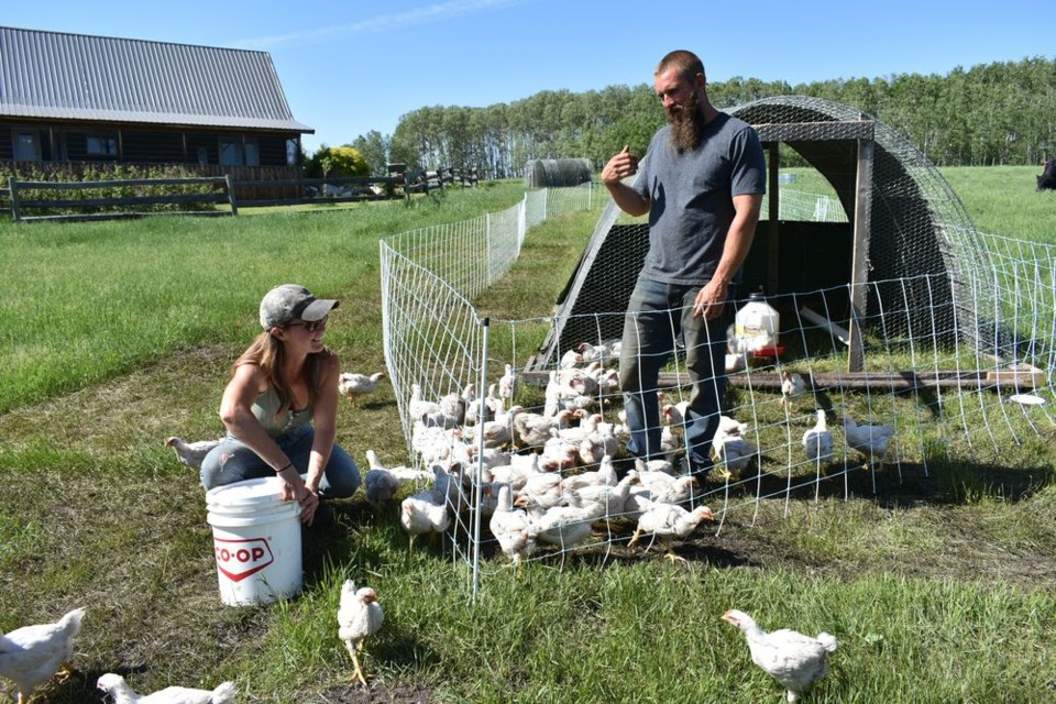 """Erin McLaughlin (left) and Colin Rickard of Berserker Farms have recently settled into the small, regenerative farm life. The city dwellers moved to East Central Saskatchewan from their homesteading lifestyle in Ontario to become first generation meat and poultry farmers in the RM of Livingston. Berserker Farms uses custom made """"chicken tractors"""" that are outdoor portable runs that house chickens and keep them safe while on pasture. Moved daily onto fresh grass, their birds receive fresh air, exercise, sunshine, and all the organic local grain they want."""