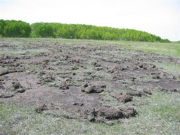 Wild Boar are expected by Dr. Brook to match or outnumber the population of humans in Saskatchewan in the next decade unless they are studied and an effective eradication program is created, otherwise there could be millions of dollars worth of damage done by feral pigs in Saskatchewan to agriculture while also changing the provinces ecosystem for native species.