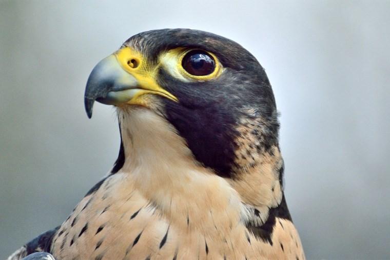 40A-Animal Webcams in Alberta