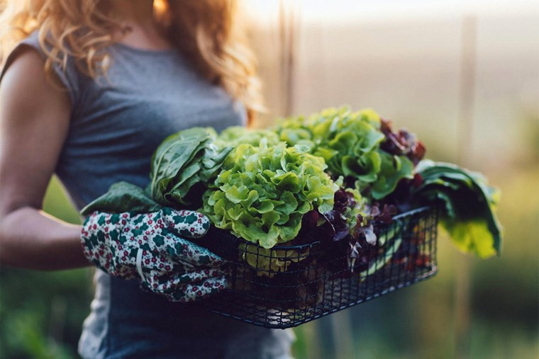 Article-30B_your-guide-to-greens-vitamins-minerals-and-health-benefits