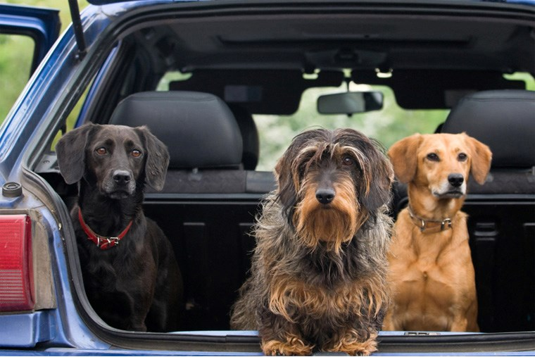 Article-17B_pet-proof-your-vehicle-with-this-helpful-guide