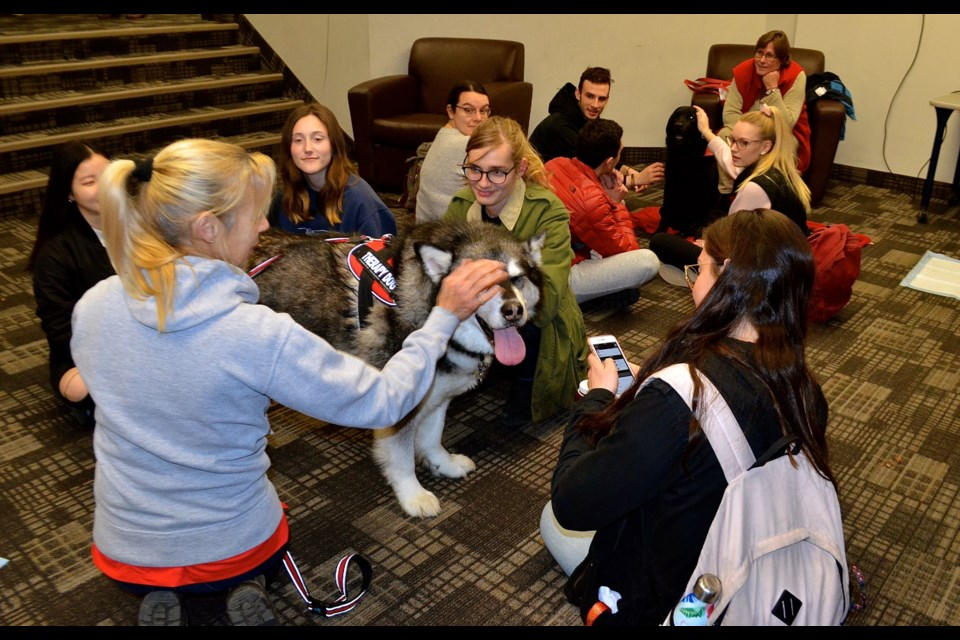 U of G students visit with therapy dogs Mac and Lupo from Therapeutic Paws of Canada during a Take A Paws session at Mountain Hall.  Troy Bridgeman for GuelphToday.com