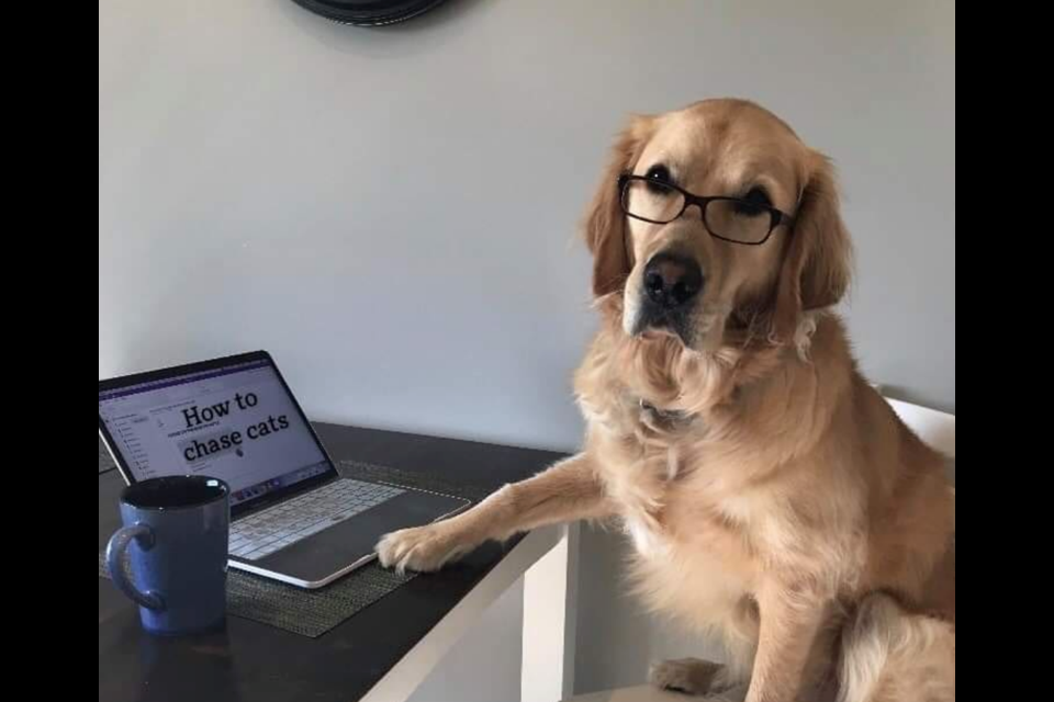 A photo from OVC's Instagram page of a dog on the computer while students study for classes during exam time. Supplied photo