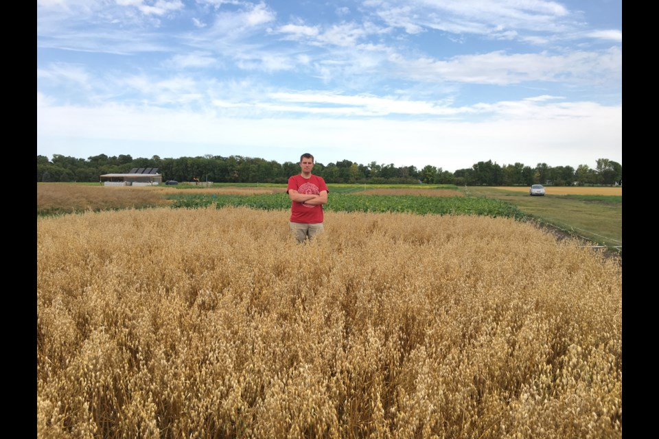 Callum Morrison standing between my research plots at our long-term cover cropping experiment in Carman, Manitoba which compares rotations using cover crops and those without cover crops. Supplied photo