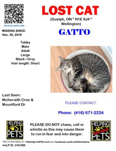 2019-12-04 lost cat Gatto