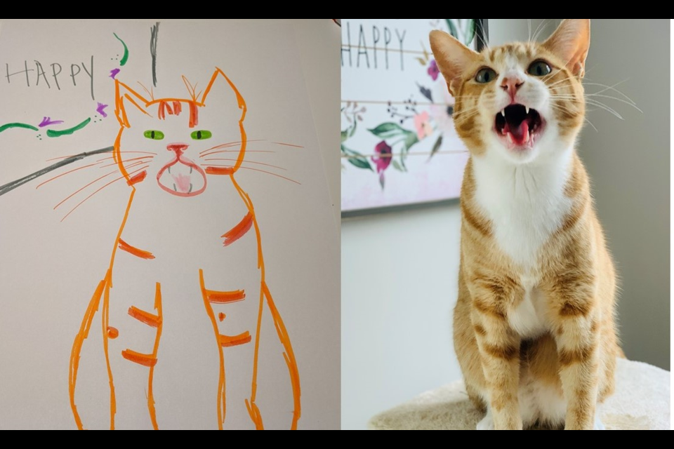Rooster the cat, right, and a portrait of Rooster done by GHS director Katie MacDonald. Supplied photo