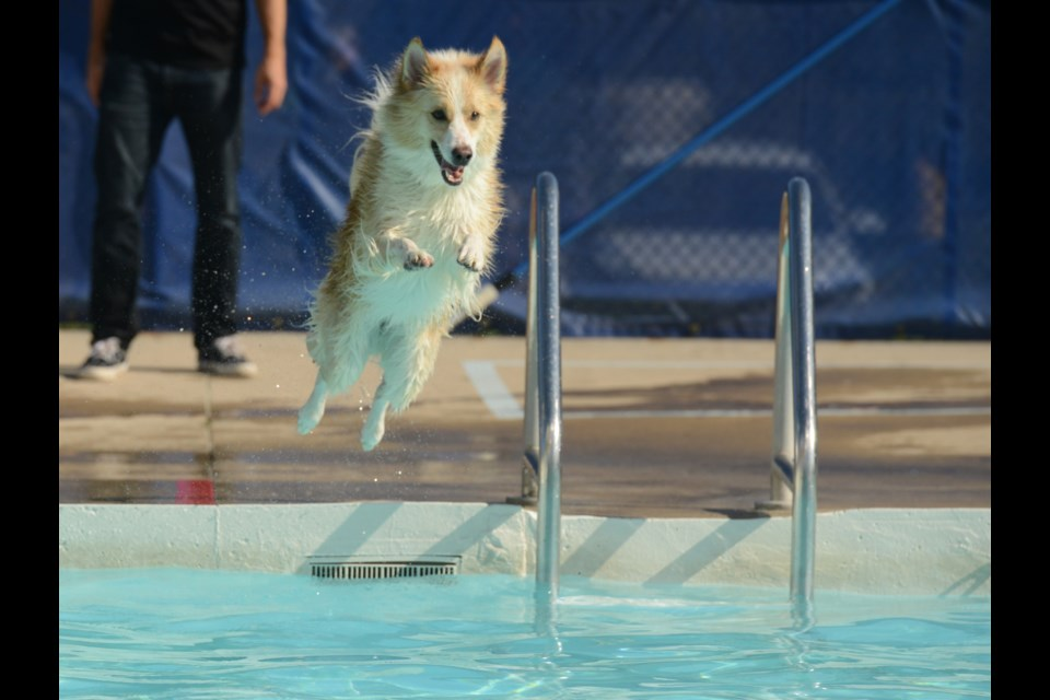 The City of Guelph held a dog swim on the final day of Lyon Park Pool on Monday, with 120 dogs registered for the three-hour events, 40 dogs per hour. The event was a first for the city and they hope to make it an annual one.