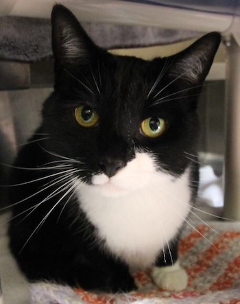 Adopt Me: Snuggly Boots loves attention
