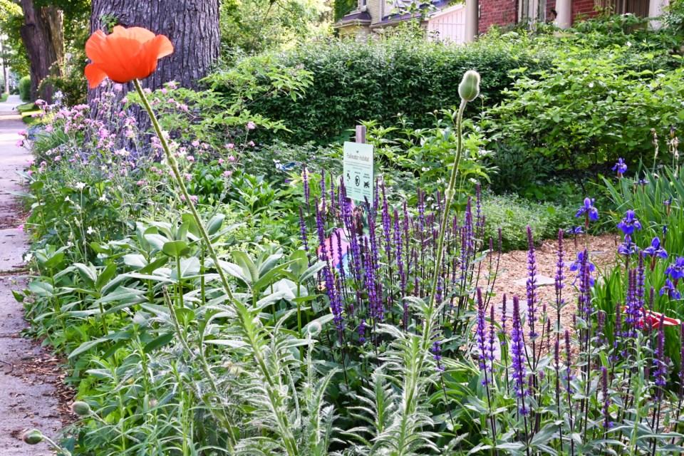 Part of a pollinator garden. Photo from Nigel Raine.