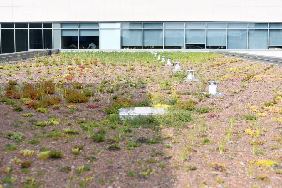 Plenty of windows do look out at City Hall's green roof. Rob Massey for GuelphToday