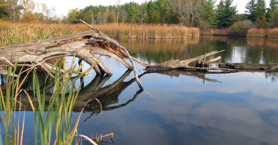 Grand River Conservation Authority -wetland