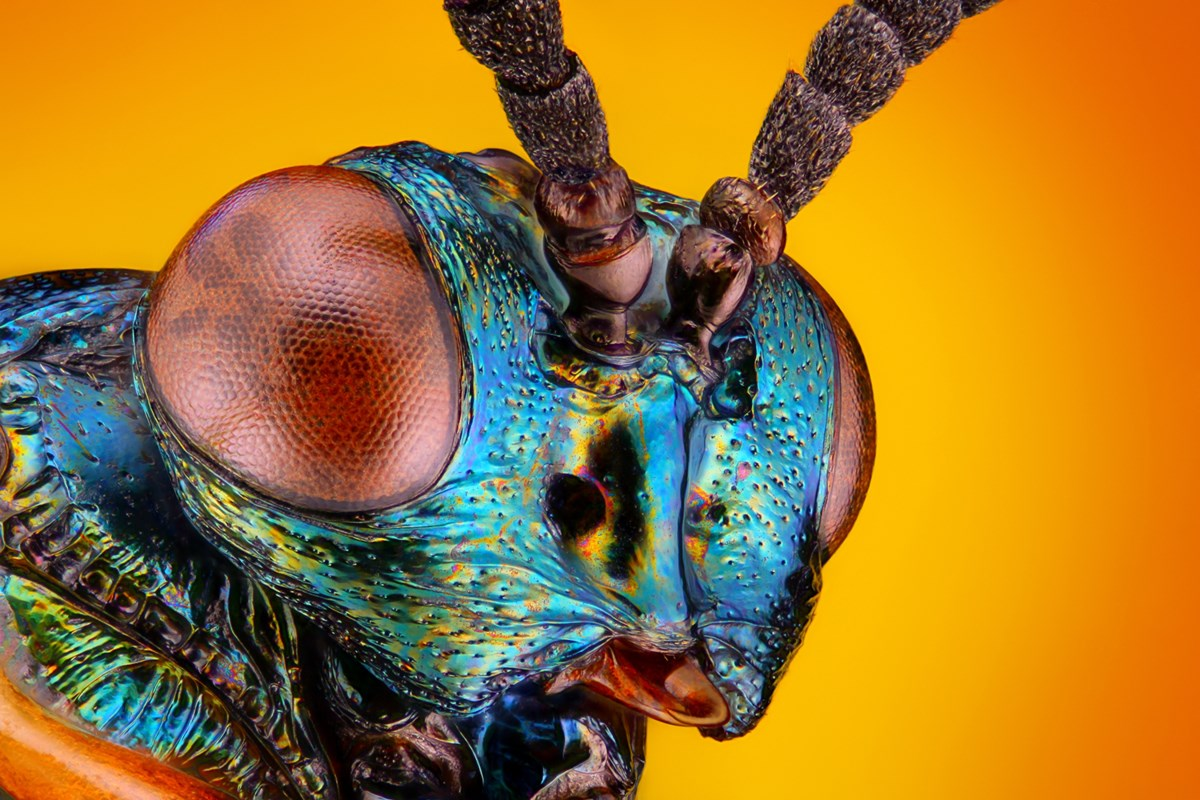 BEYOND LOCAL: How insects rise from the dead and transform corpses into skeletons