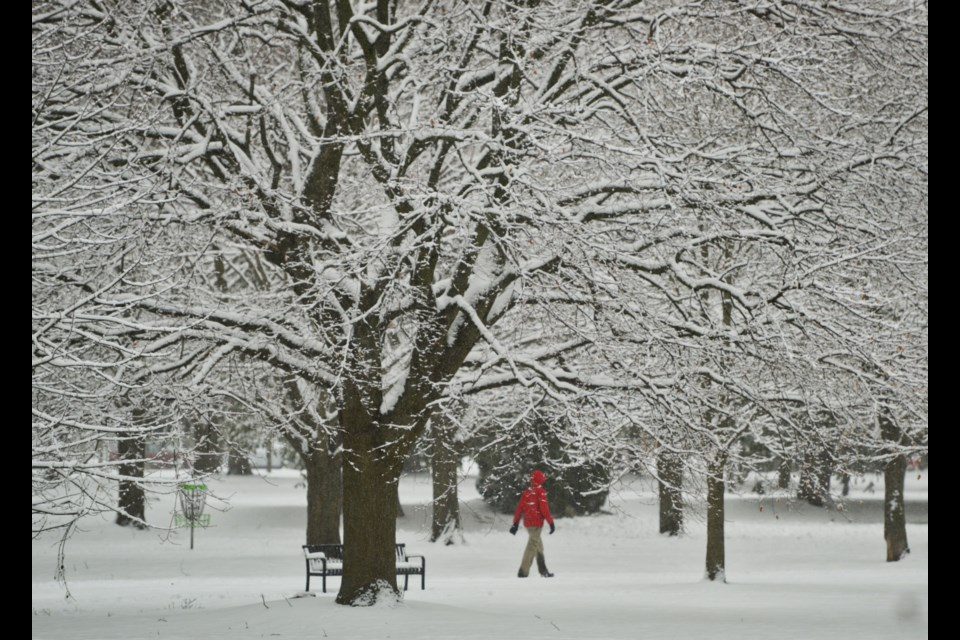A man goes for a walk in Riverside Park during Sunday's heavy snowfall. Tony Saxon/GuelphToday