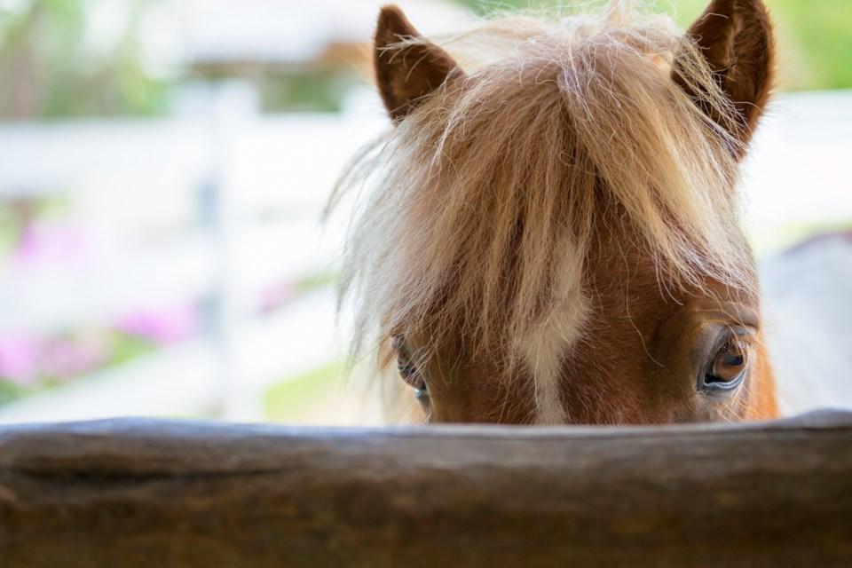 052418-horse-stable-barn-AdobeStock_91311255