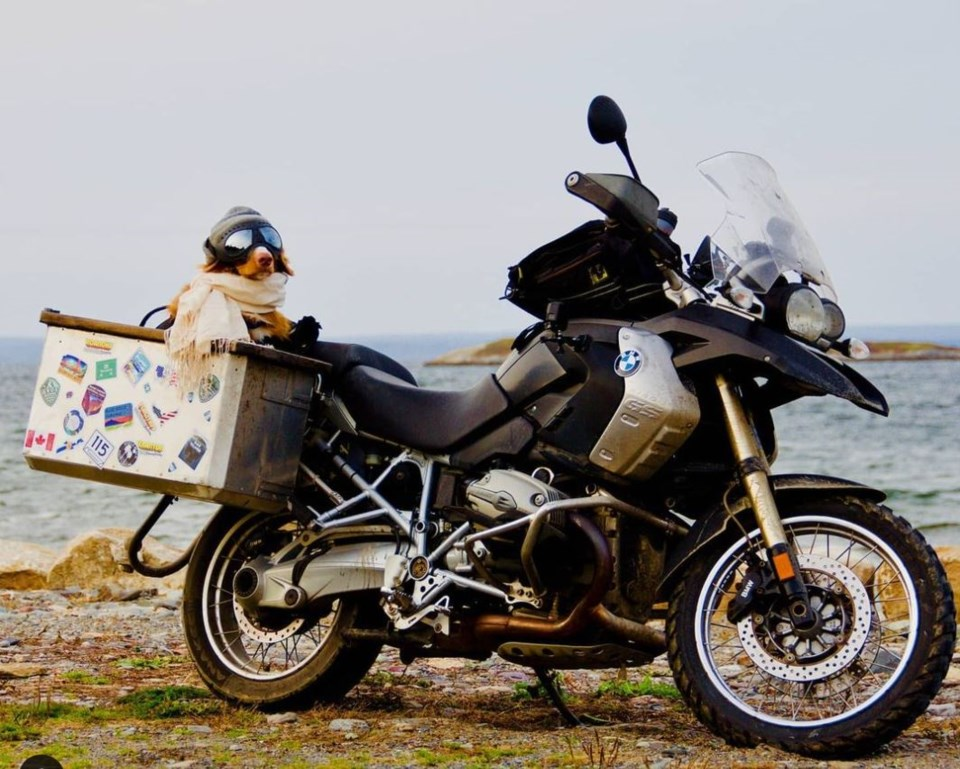 111920 - puppercycle