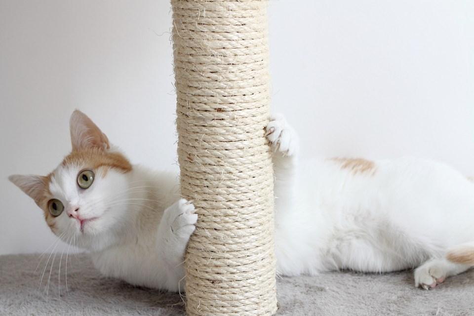 112117-cat-AdobeStock_105113161