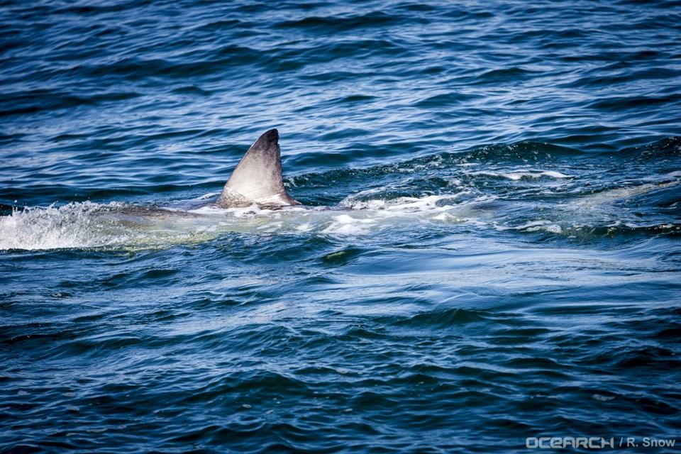 112717-hilton-2-shark