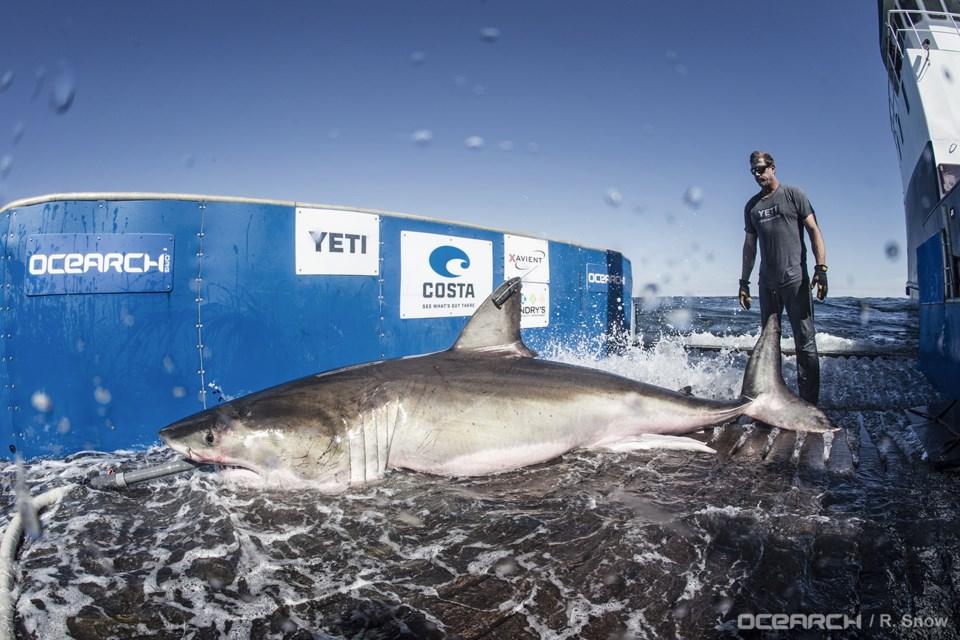 112717-hilton-3-shark