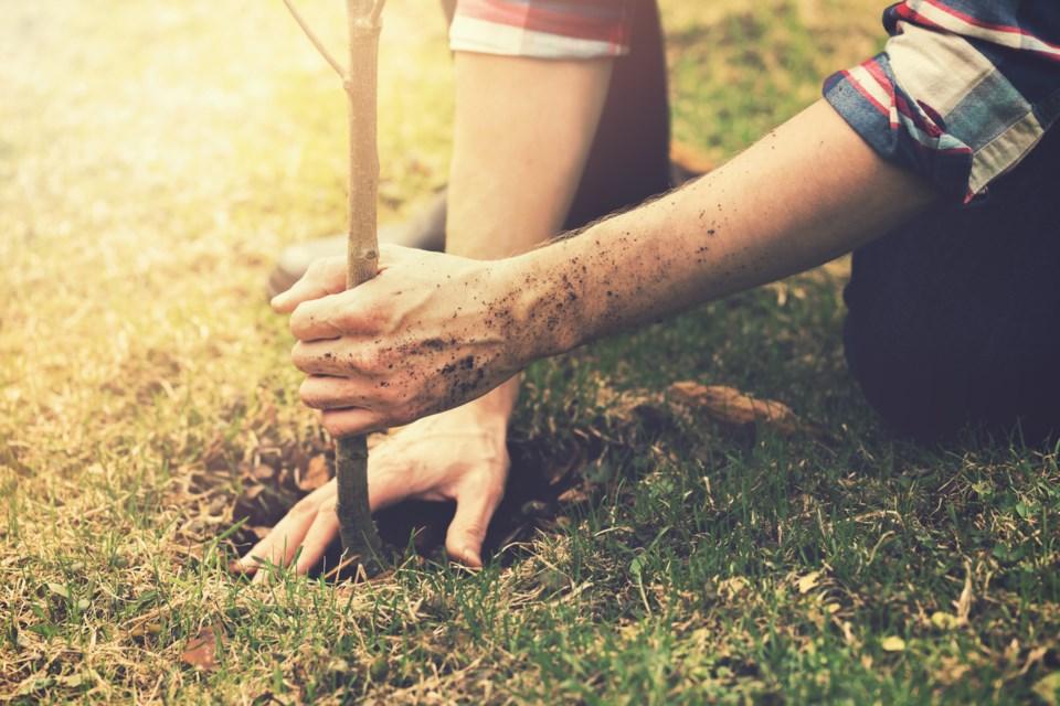 062019-tree planting
