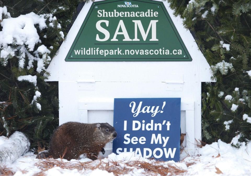 101317-ShubieSam-ns gov-groundhog day