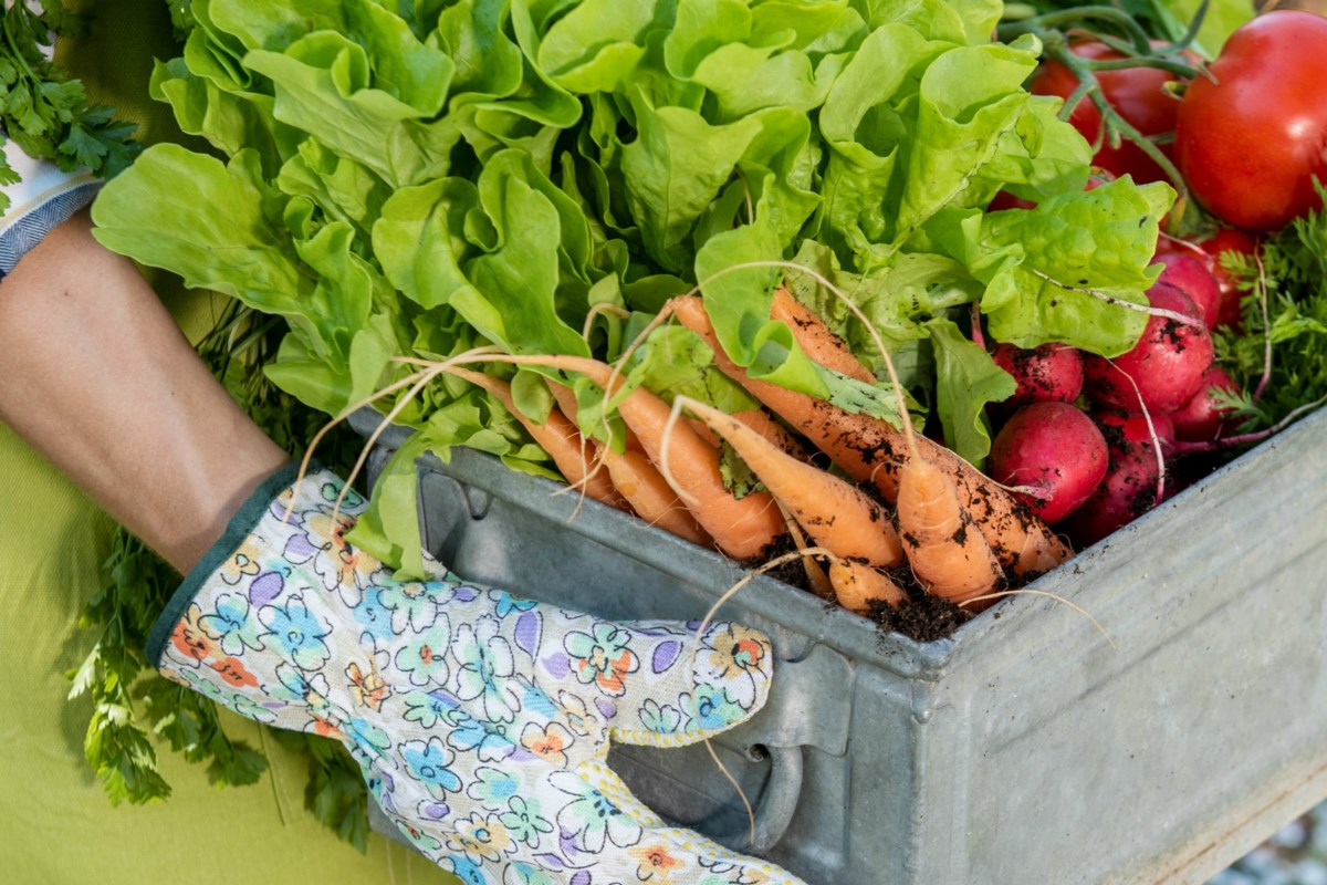 BEYOND LOCAL: Benefits of gardening, growing your own food, during pandemic and beyond
