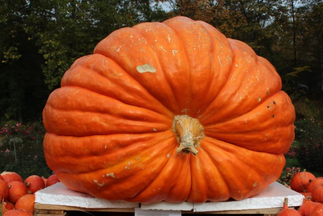 091719-giant pumpkin-AdobeStock_138622238