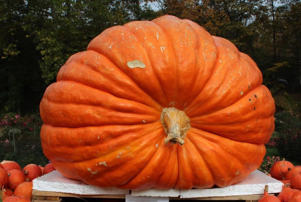 091719-giant pumpkin-AdobeStock_138622238