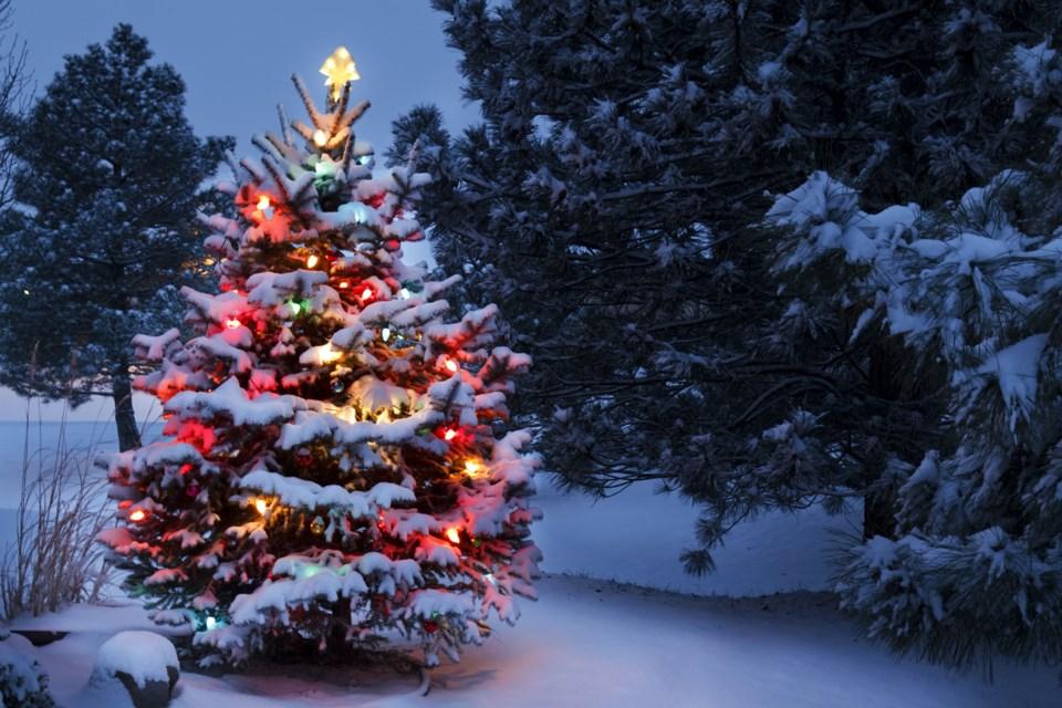 112217-christmas tree-AdobeStock_54236814
