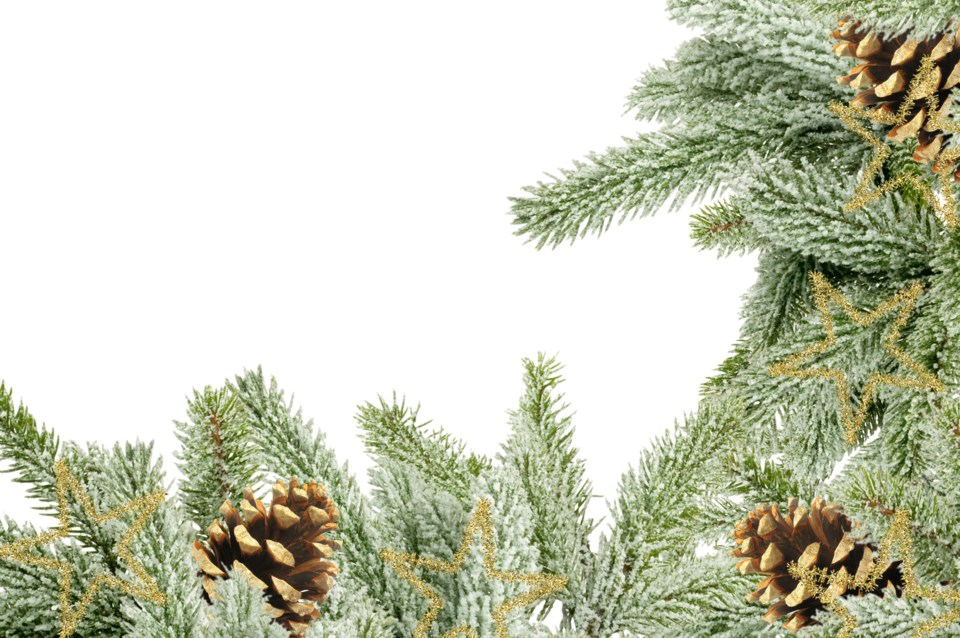 Newburgh Christmas tree farm open for the season
