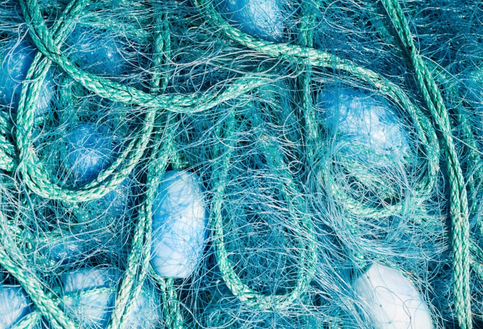 061119-net-buoy-fishing gear-whale entanglement-AdobeStock_70109406