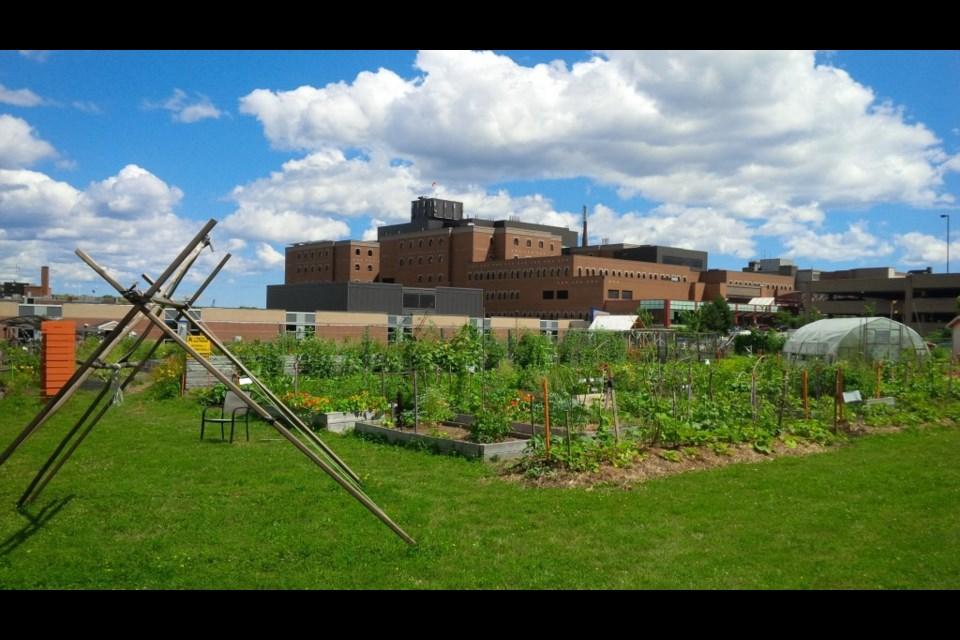 Common Roots Urban Farm (Meghan Groff/HalifaxToday.ca)