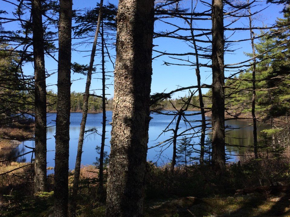 101317-lake-woods-forest-hike-camp-outdoors-wilderness-generic-MG