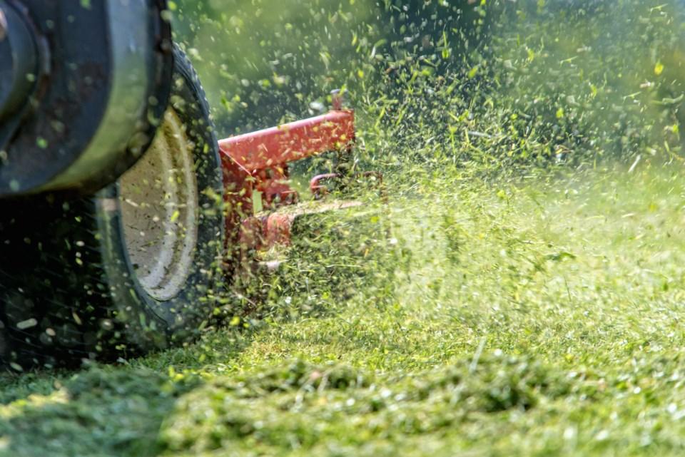 071318-lawn mower-grass-AdobeStock_113298116