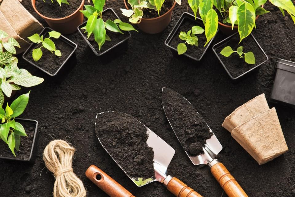 071618-garden-gardening-plant-planting-AdobeStock_88548348