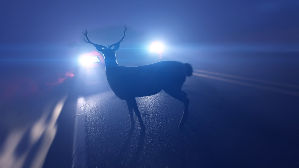 110819-deer in road - wildlife in road - AdobeStock_224147094